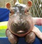 `Patrick`